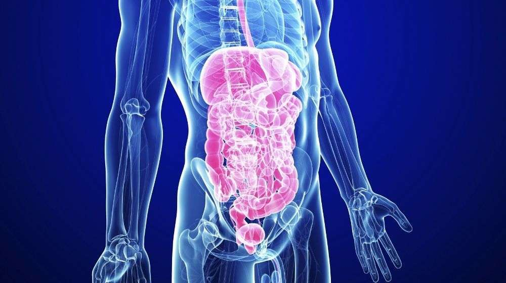 digestive system visulisation | feature | How to Treat A Leaky Gut With Food And Supplements