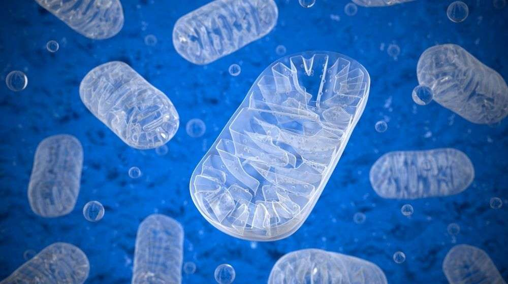 3D-image-of-Mitochondria | Feature | Why Mitochondria Are So Important For Our Health