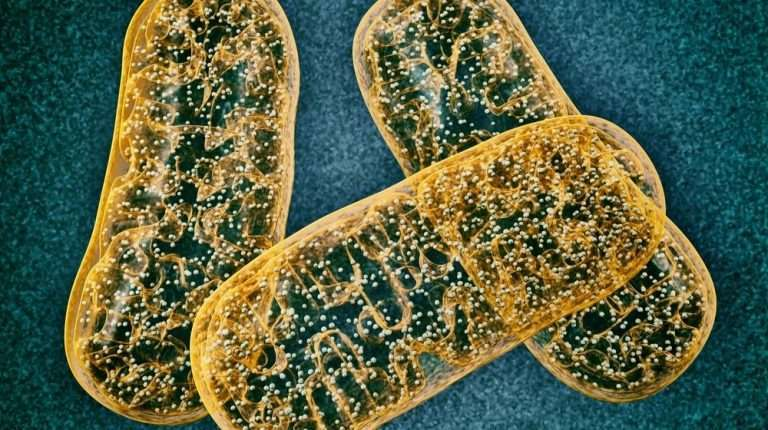 image-of-yellow-Mitochondrion | Featured | How ss31 Improves Mitochondrial Dysfunction