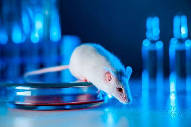 white-lab-mouse-step-on-metal-cylinder-on-exam-table-vial-in-background   New Studies Show Improved Cognition   Age-Related Mental Decline Could Be Reversed With New Drug