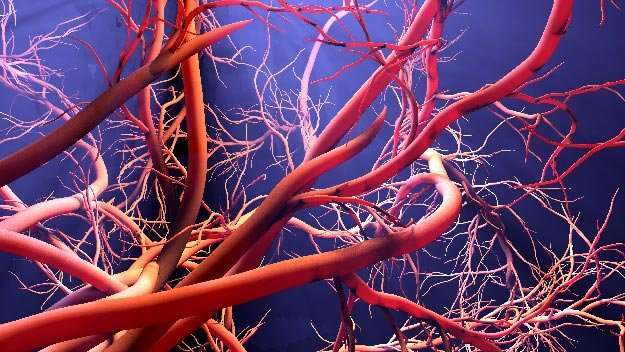 BPC-157-benefits in the creation of new blood vessels _Body | BPC-157 | A Potent Anti Inflammatory Peptide With Multiple Benefits