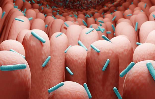 gut-bacteria,-microorganisms-in-human-intestine-3d-rendering-ss-body   What Is The Role Of Gut Microbiome To Your Health?